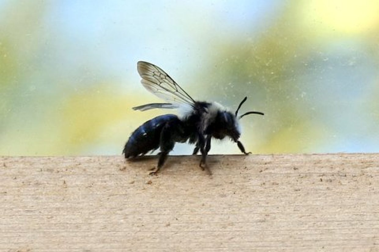 Bee Roadzz employ 'citizen science' to monitor the impact of campaign